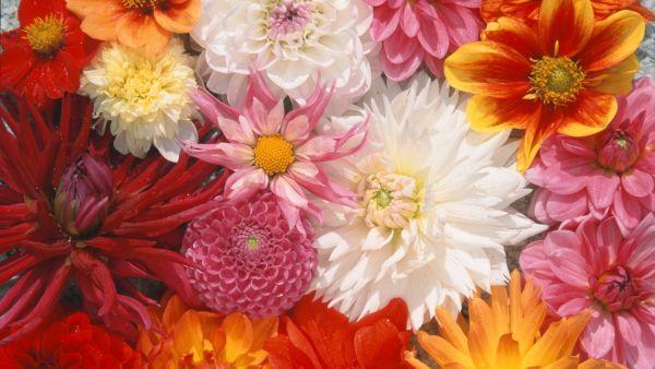 Заказ цветов семян интимный подарок жене на 8 марта