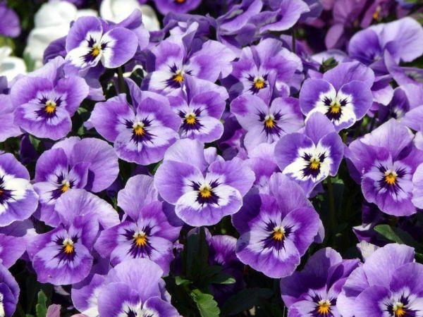 Фото цветов профессиональные