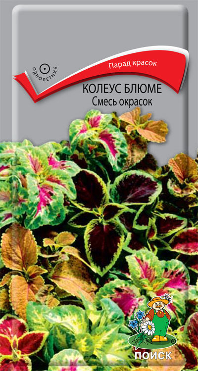 Клеродендрум, семена цветов почтой казахстан